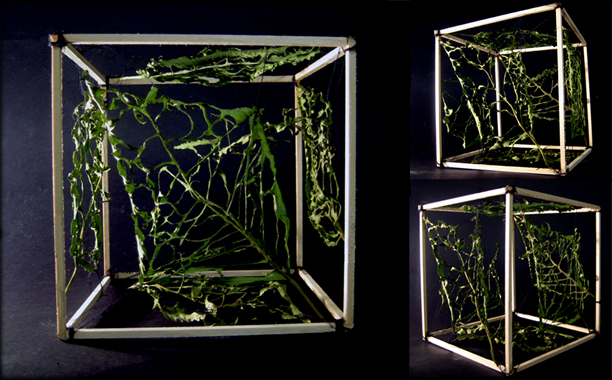 Cube of Nature